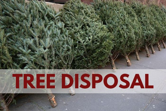 Tree Disposal